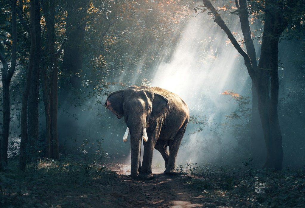 słoń tapeta 3D