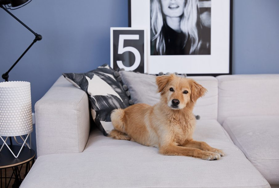 pies na sofie